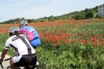 Blühende Mohnblumenfelder nach Cardona