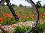 Radsport und Natur vereint