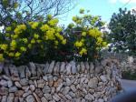 Die berühmten Trockenmauern
