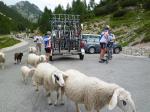 auf der Passhöhe begrüssen uns die Schafe